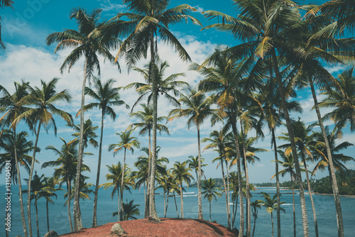 Palm trees on tropical beach, vintage toned and retro color stylized