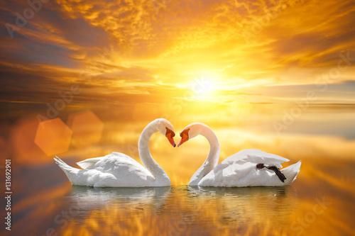 beautiful White swan in heart shape on lake sunset .Love bird concept