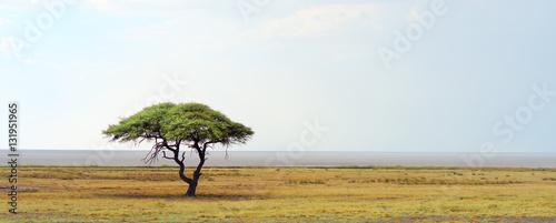 Fotografie, Obraz african landscape