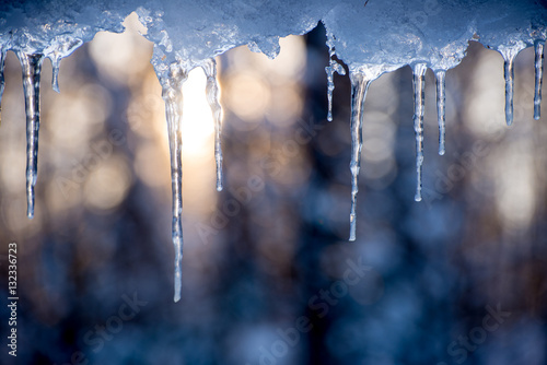 Fotografia icicles hanging with sun rising behind in a forest