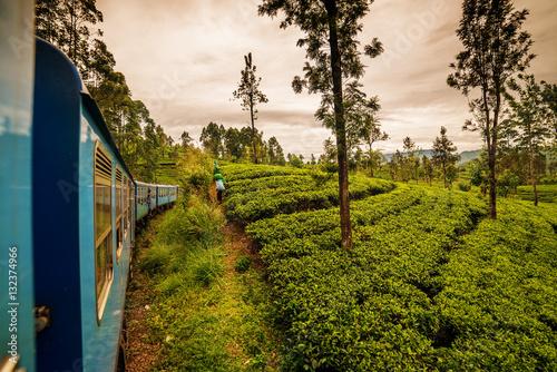 Canvas Print Sri Lanka: highland tea fields next to Nuwara Eliya, tea collectors and train S