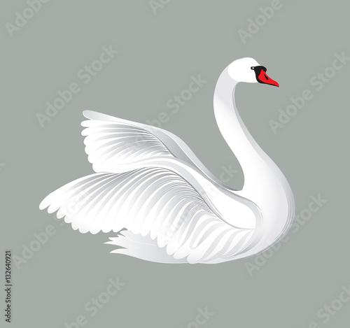Fotografie, Obraz White bird isolated over white background. Swans illustration.