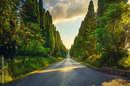Tableau sur Toile Bolgheri cypresses tree straight boulevard. Tuscany Italy