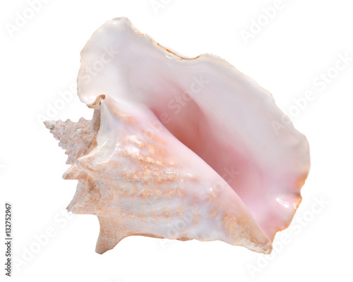 Fotografering Large pink queen conch seashell isolated on white background