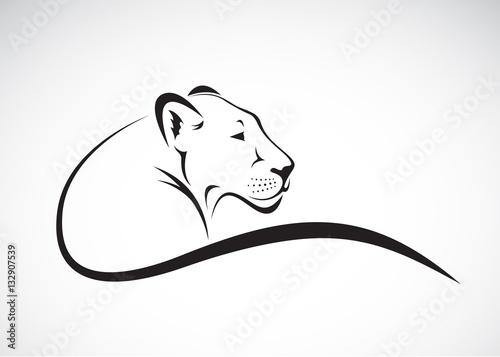 Carta da parati Vector of a lion female design on white background, Wild Animals.