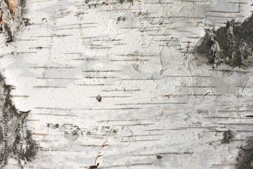 Fotografiet birch bark texture natural background paper close-up
