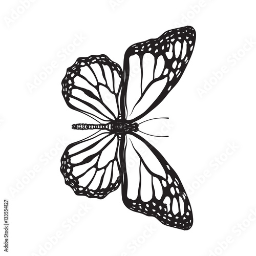 Stampa su Tela Top view of beautiful monarch butterfly, sketch illustration isolated on white background