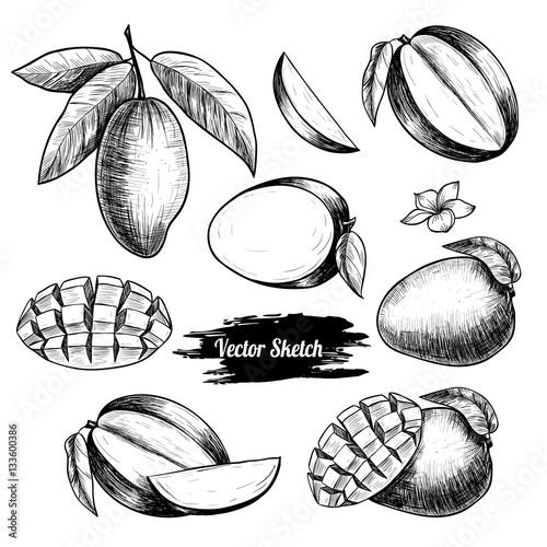 Photo Vector mango hand drawn sketch