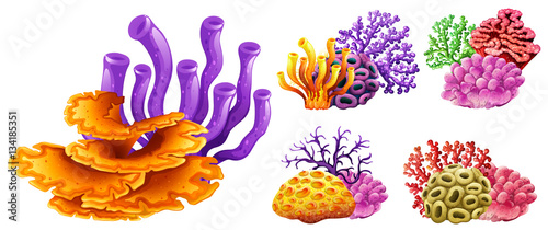 Stampa su Tela Different kinds of coral reef