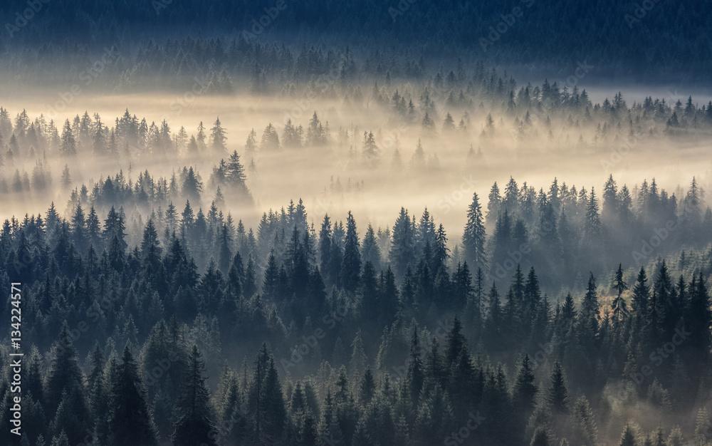 Fototapeta premium las iglasty w mglistych górach
