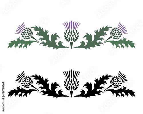 Valokuva Thistle. Onopordum acanthium. Scottish Thistle