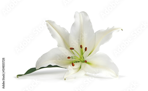 Stampa su Tela Just a Lone Lily Being Beautiful - the white lily symbolizes virginity, chastity