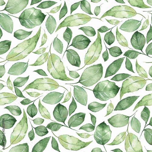 Fototapeta Zielone liście drobne klasyczny styl