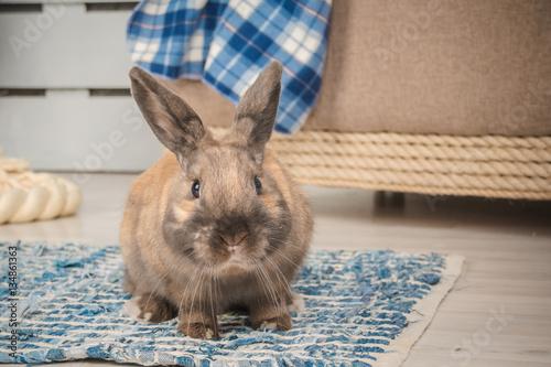 Fototapeta sweer bunny