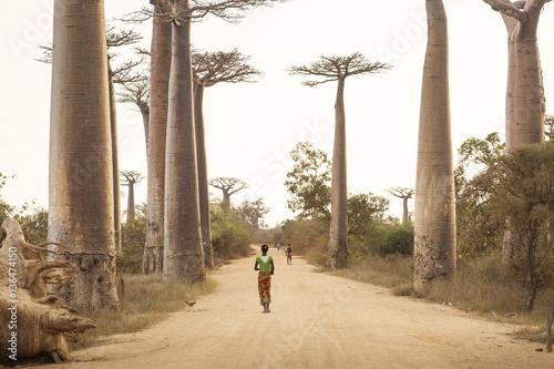 Fotografia Baobab Alley in Madagascar, Africa. People walking on baobab all