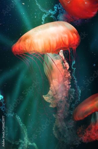 Magical Orange Jellyfish