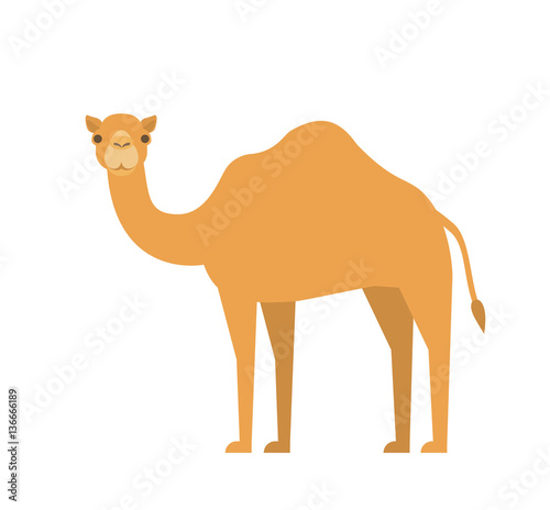 Foto cartoon camel in flat style on white background