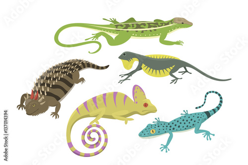 Stampa su Tela Different kind of lizard reptile isolated vector illustration.