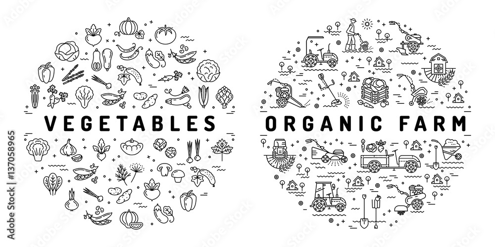 Agriculture farming and Vegetable flat infographics. Thin line icons of vegetables and farm equipment machinery. Organic farm symbols, Vector illustration <span>plik: #137058965 | autor: Decobrush</span>
