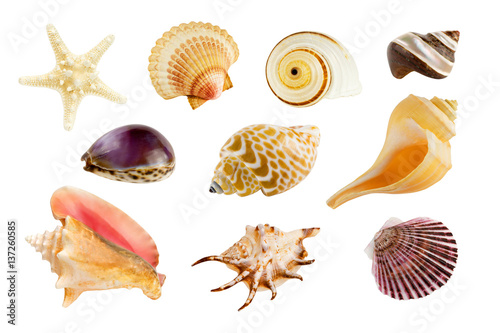 Billede på lærred Collection of ten different seashells, isolated on pure white background