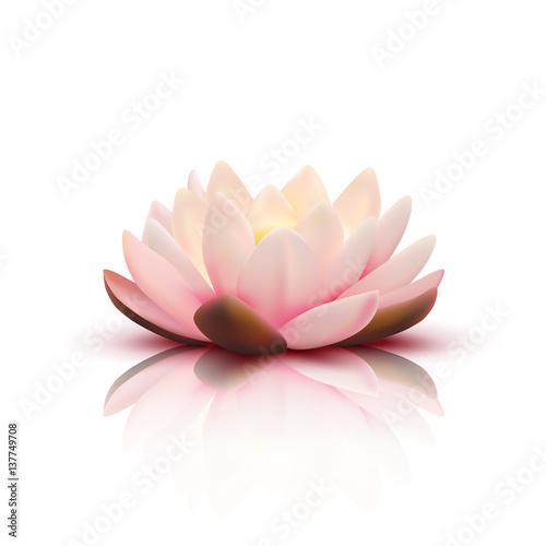 3D Flower Of Lotus Fototapeta