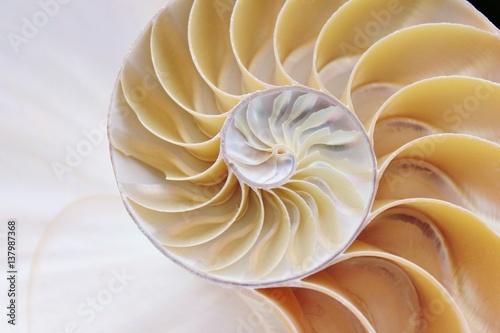 shell nautilus pearl Fibonacci sequence symmetry cross section spiral shell structure golden ratio background mollusk (nautilus pompilius) copy space half split stock, photo, photograph, image