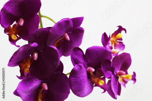 Photo purple flower 6