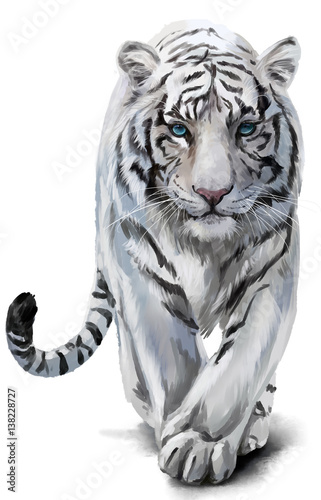 Photo White tiger sneaks watercolor painting
