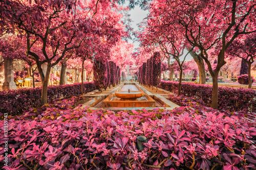 Photo Cathedral garden