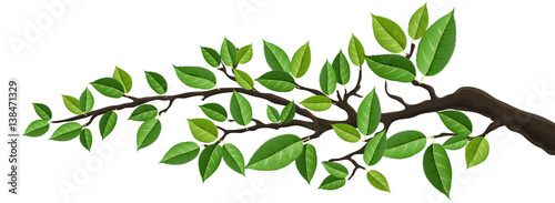 Tela Horizontal banner with tree branch and green leaf, isolated on white