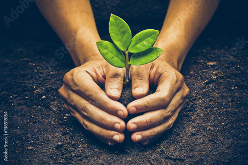 Fotografia Love and protect nature. Hands holding a tree