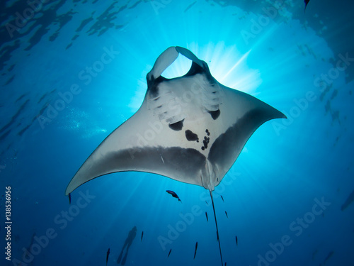 Photo Giant Manta ray from underneath blocking out sun with a snorkeler on the surface