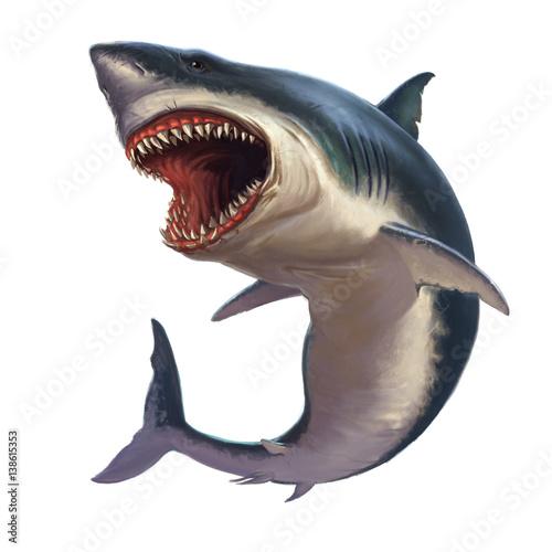 Fototapeta premium Żarłacz biały na białym tle
