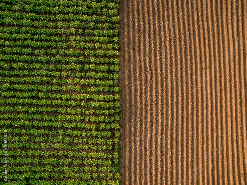 Aerial view ; Rows of soil before planting Fototapeta