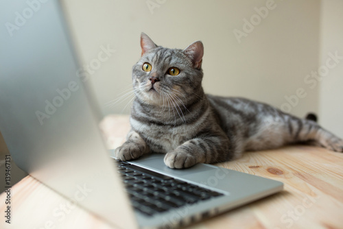 Canvas Print cat using the computer