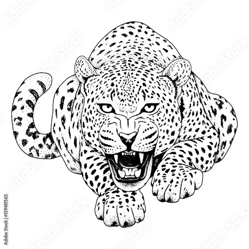 Fotografia, Obraz Leopard face tattoo ,Vector illustration, print