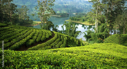 Canvas Print Tea plantations around the castlereagh reservoir Hatton, Sri lanka
