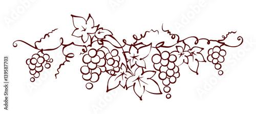 Photo Design elements -- vine / Graphic vector illustration, grapes drawing sketch