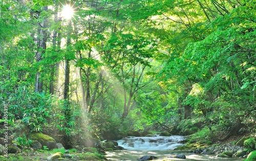 初夏の森・朝陽と清流の風景