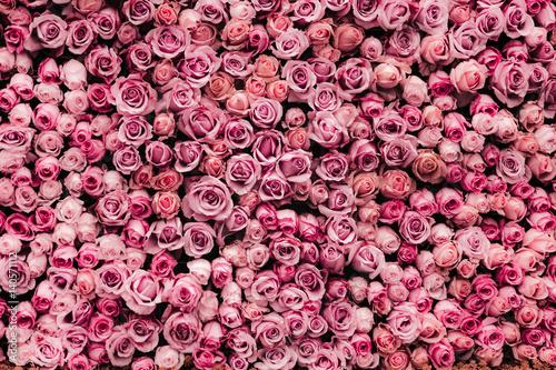 Fototapeta premium tło ściany kwiaty z niesamowitymi różami