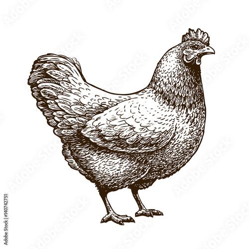 Obraz na plátne Hand-drawn chicken, hen
