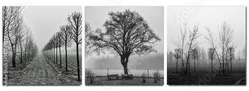 Obraz na płótnie triptych - trees in morning fog - monochrom