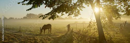 Obraz na plátně Lonely horse on an autumnal pasture