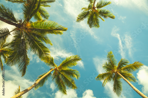 Coconut palm trees in cloudy sky
