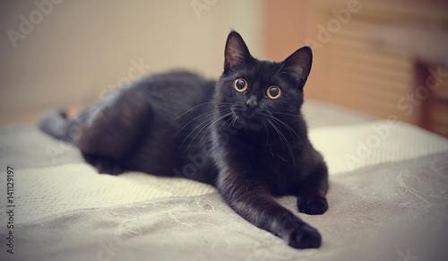Fotografia Black cat with yellow eyes lies on a sofa.