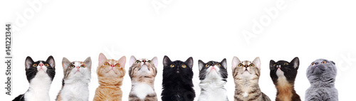 Fényképezés closeup portrait of a group of cats of different breeds looking up isolated on w