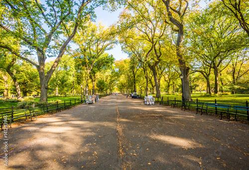 Carta da parati Beautiful park in beautiful city