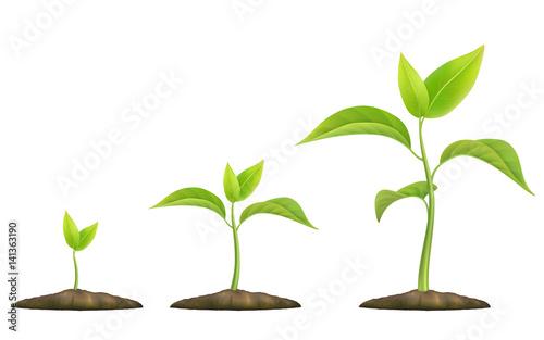 Fényképezés Stages of plant growth