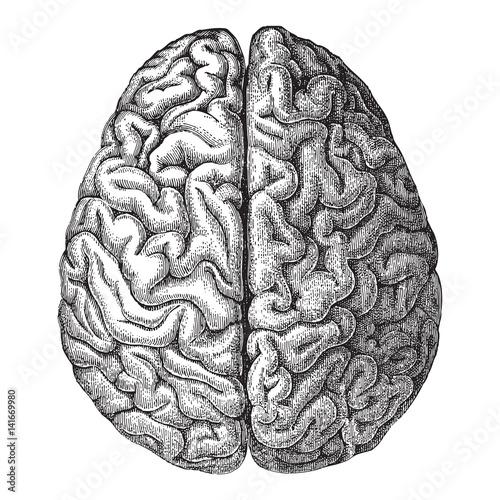 Leinwand Poster Menschliches Gehirn - Weinleseillustration