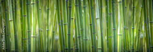 Fotografija bamboo wide pano